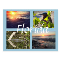 Florida photography postcard