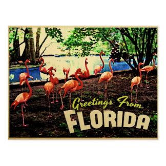 Florida Pink Flamingos Postcard