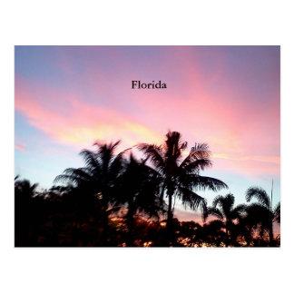 Florida Plam Tree Sunset Postcard