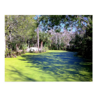 Florida River Wilderness Postcard