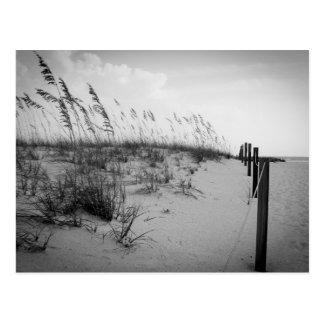 Florida Sand Dunes Postcard
