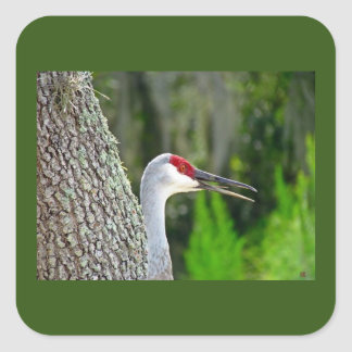 Florida Sand Hill Crane Stickers