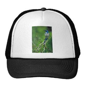 Florida scrub-jay mesh hat