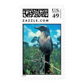 Florida Scrub Jay Postage Stamp