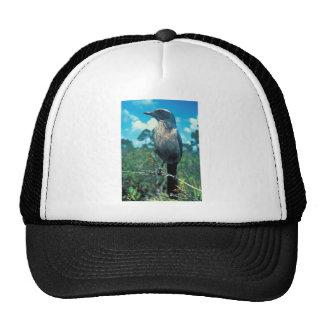 Florida Scrub Jay Trucker Hat