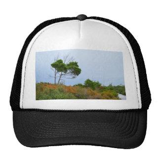Florida scrub land trees mesh hat