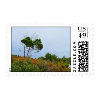 Florida scrub land trees postage stamp