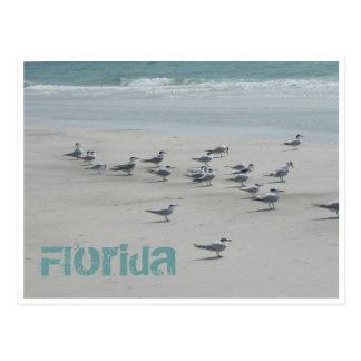Florida Sea Birds Postcard