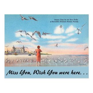 Florida, Sea Gulls, Daytona Beach Postcard
