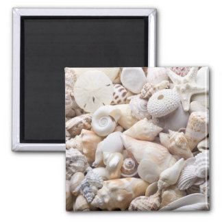 Florida Sea Shell Background - Beach Shells Custom 2 Inch Square Magnet