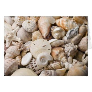 Florida Sea Shell Background - Beach Shells Custom Greeting Card