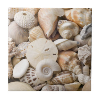 Florida Sea Shell Background - Beach Shells Custom Ceramic Tile