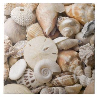 Florida Sea Shell Background - Beach Shells Custom Ceramic Tile
