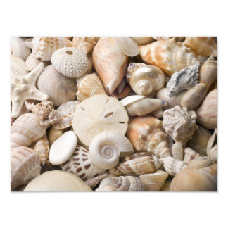 Florida Sea Shell Background - Beach Shells Custom Photographic Print