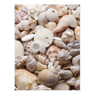Florida Sea Shell Background - Beach Shells Custom Postcard