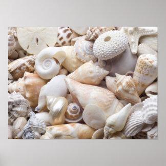 Florida Sea Shell Background - Beach Shells Custom Poster