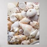 Florida Sea Shell Background - Beach Shells Custom Posters