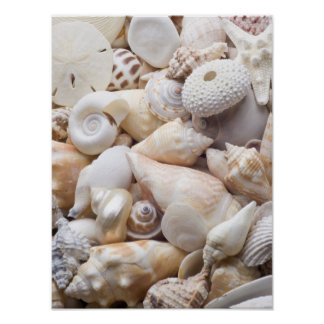 Florida Sea Shell Background - Beach Shells Custom Poster