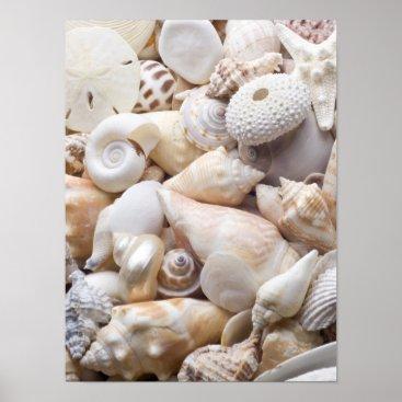 SilverSpiral Florida Sea Shell Background - Beach Shells Custom Poster