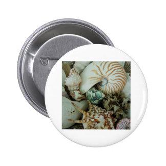 Florida Sea Shells Button