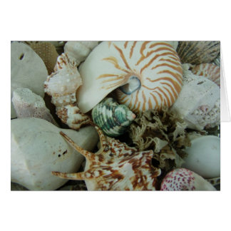 Florida Sea Shells Cards