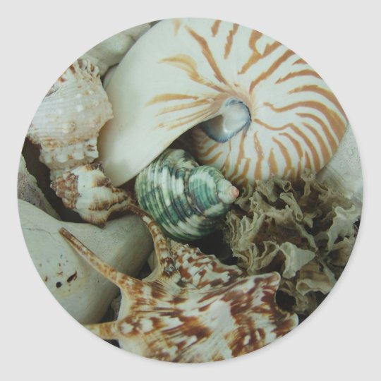 Florida Sea Shells Classic Round Sticker