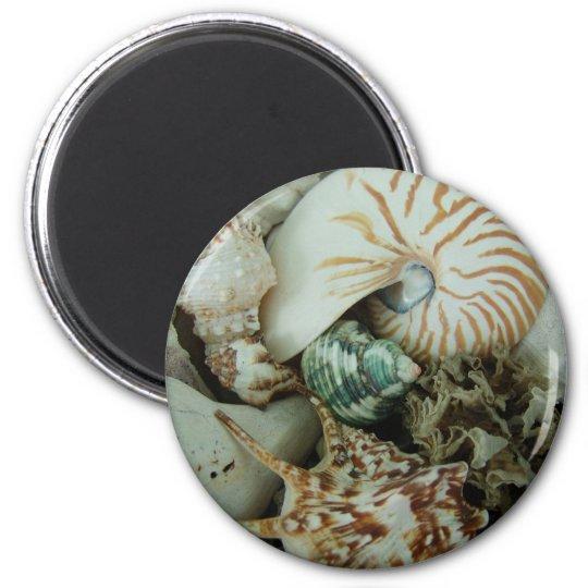 Florida Sea Shells Magnet