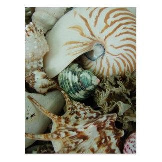 Florida Sea Shells Post Card