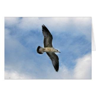 Florida seagull flying against blue sky card