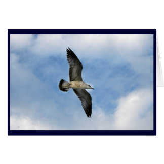 Florida seagull flying against blue sky greeting card
