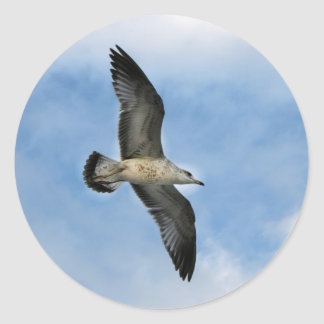 Florida seagull flying against blue sky classic round sticker