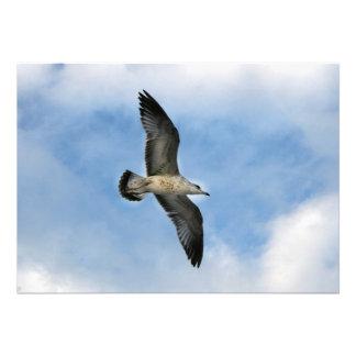 Florida seagull flying against blue sky custom invites