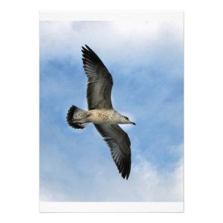 Florida seagull flying against blue sky custom invitations