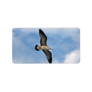 Florida seagull flying against blue sky personalized address label