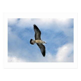 Florida seagull flying against blue sky post card