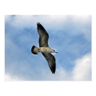 Florida seagull flying against blue sky postcard