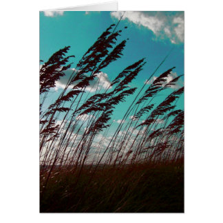 Florida seaoats against teal sky dune backdrop card