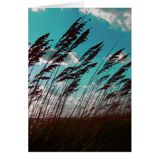 Florida seaoats against teal sky dune backdrop greeting card