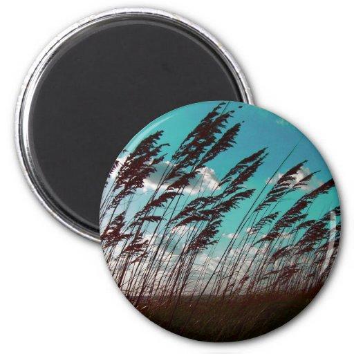 Florida seaoats against teal sky dune backdrop fridge magnets