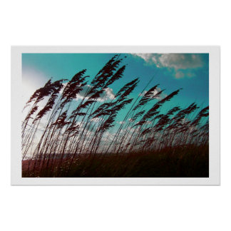 Florida seaoats against teal sky dune backdrop poster