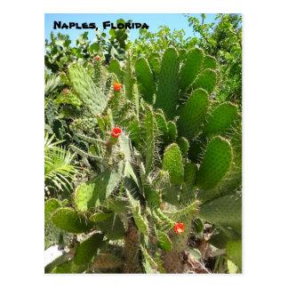 Florida Semaphore Cactus Naples Botanical Garden Postcard