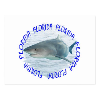 Florida shark postcard