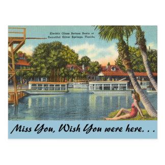 Florida, Silver Springs Postcard