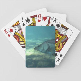 Florida Snook Playing Cards