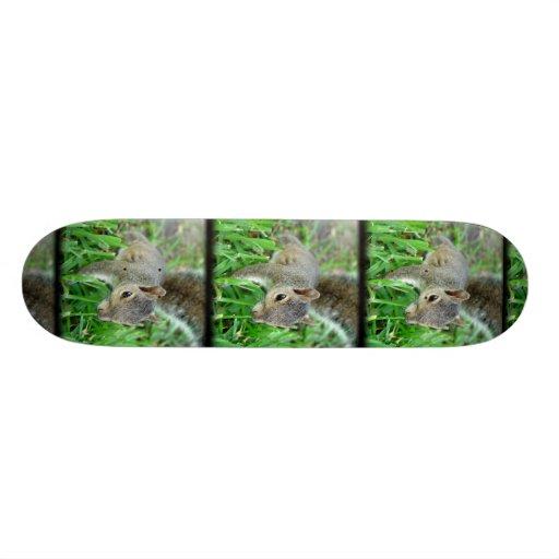 Florida Squirrel Walking In Grass Skateboard
