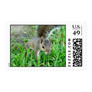 Florida Squirrel Walking In Grass Stamps