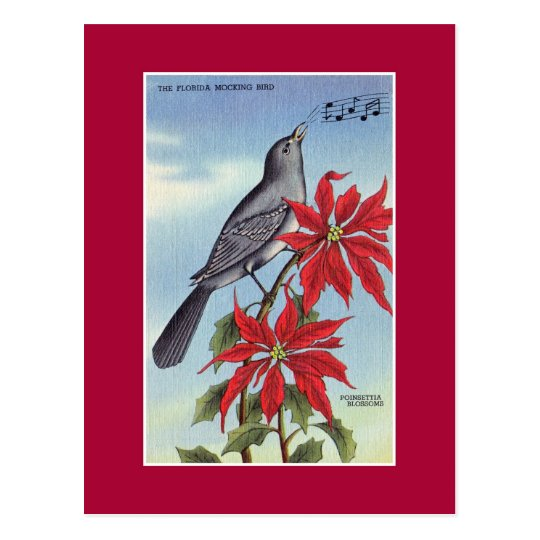 Florida State Bird And Flower Mockingbird Postcard