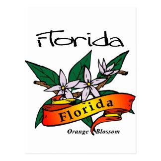 Florida State Flower Orange Blossom Postcard