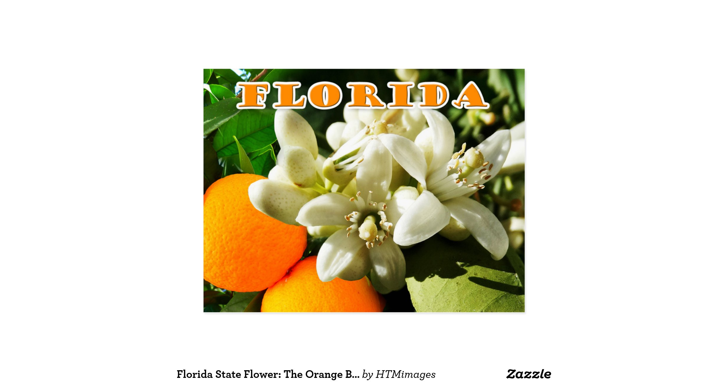 florida state flower the orange blossom postcard r864dfd6fd0854ea1b be018