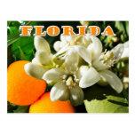 Florida State Flower: The Orange Blossom Postcard